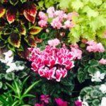 botanic gardens flower pink