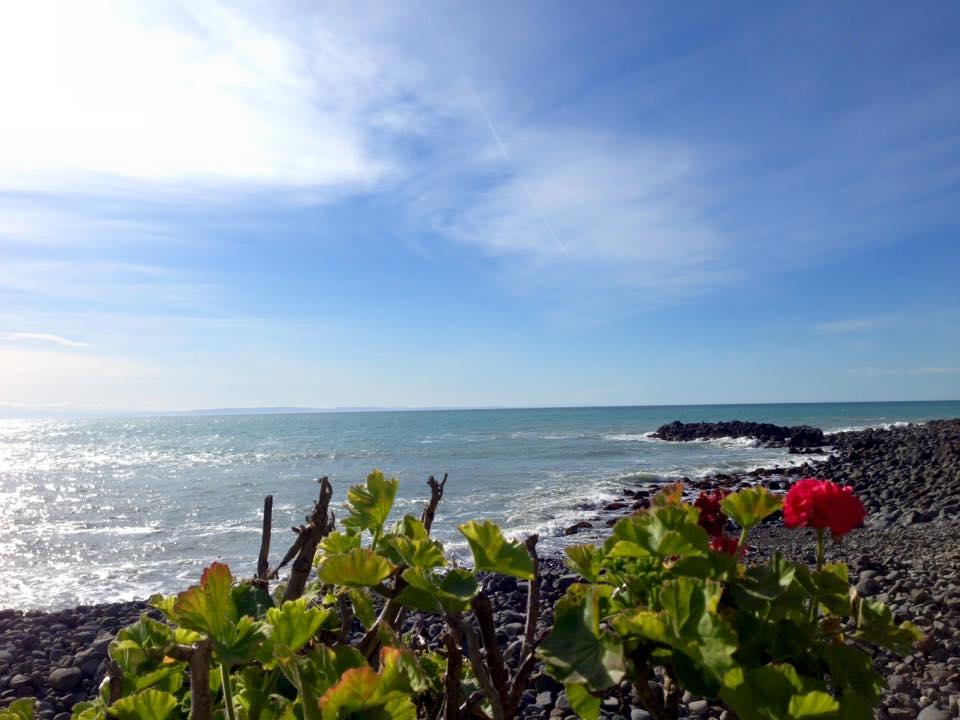 Godley Kopf Blume am Strand