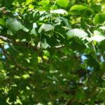 botanic gardens lee