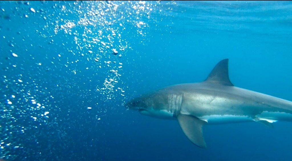 shark experience